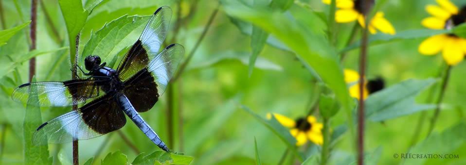 Dragonfly at Vogel Park